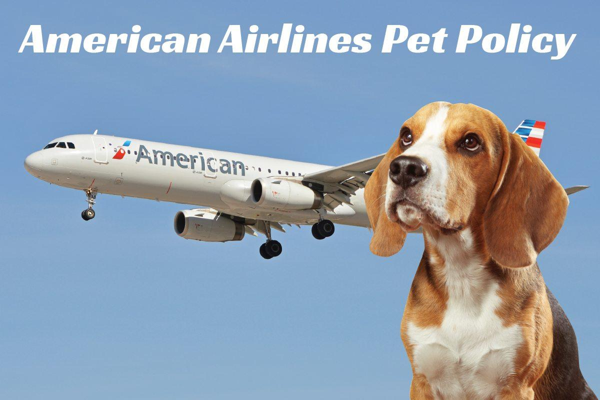 US Service Animals - Can You Bring Your Pets Aboard American Airlines?