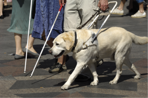 Service Animal Helping Blind