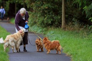 Dog with Senior