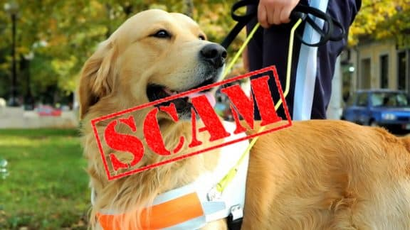Emotional Support Animal Scam