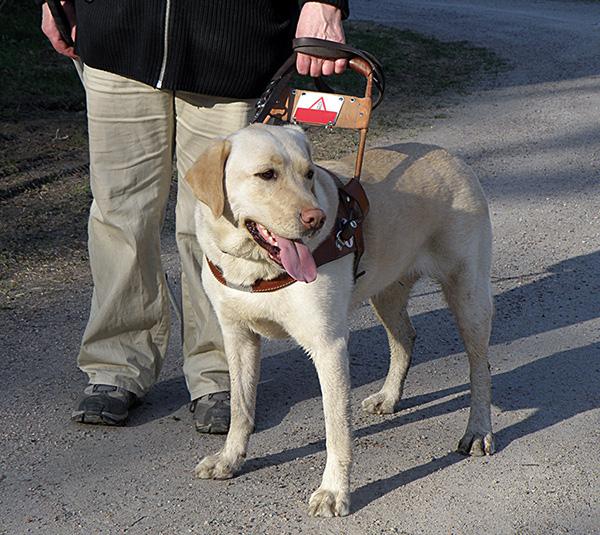 Service Dog Balance Harness