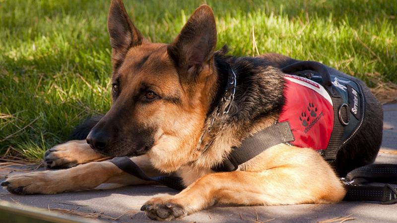 service dog supplies