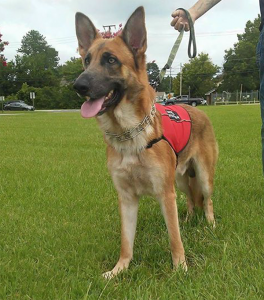 Service Dog For Anxiety