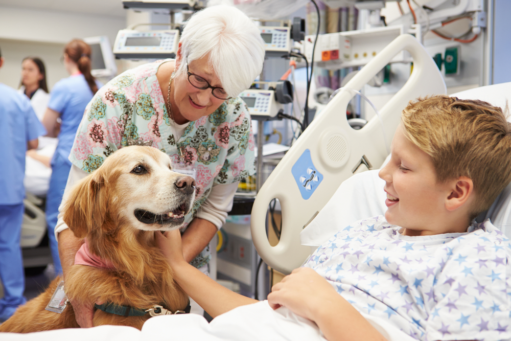 facility therapy dog visiting hospital patient
